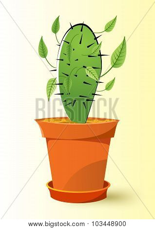 cactus plant in a pot