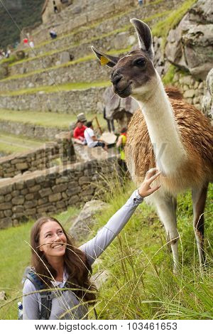 Alpaca and girl