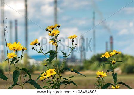Flowers Near The Refinery