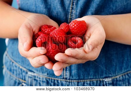 Young girl holds a handful of fresh ripe raspberries