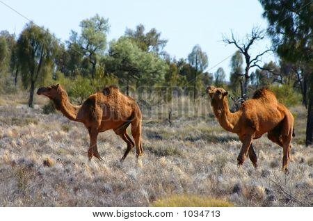 Australia Outback 46