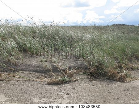 Natural sand and heath