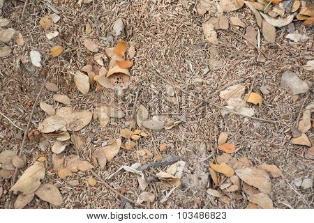 Rice Husk Dry Leaf And Dry Soil Background