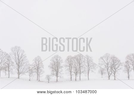 Trees In A White Landscape During Snowfall