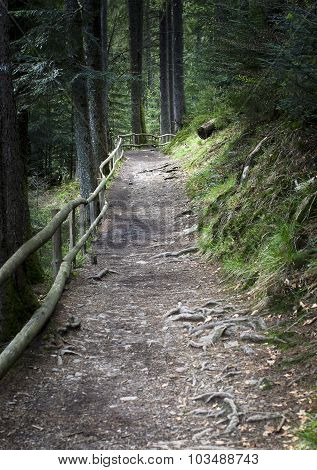 Forest Footpath Enclosed By A Wooden Fence