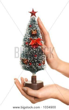 Hands Taking Care Of Christmas Tree
