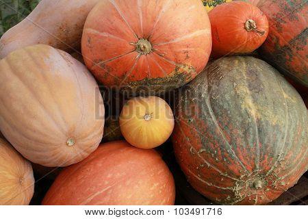 Dietary Vegetarian Food. The Big Orange Pumpkin. Cover Of The Magazine, Brochure, Postcard