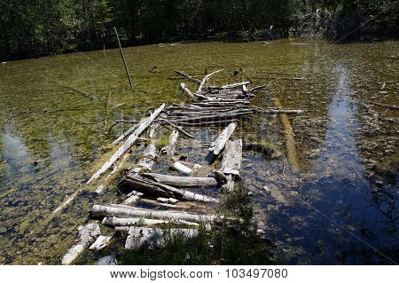 Fallen Logs in a Swamp