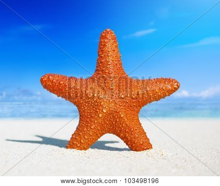 Starfish Tropical Beach Sand Summer Island Shell Concept
