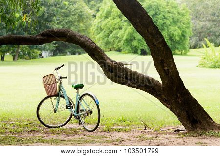 Squirrel And Vintage Bicycle In The Green Park