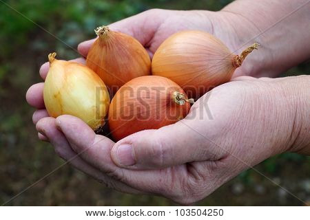 woman holding a orange onion