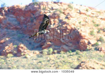 Australia Outback 81