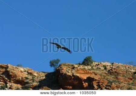 Australia Outback 82