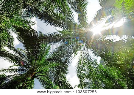 Palm leaves with sunlight.