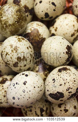 Quail Eggs Are Organic