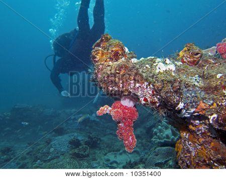 Coral overhang