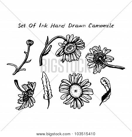 drawing black ink - daisies set of flowers leaves branches on white background. Vector