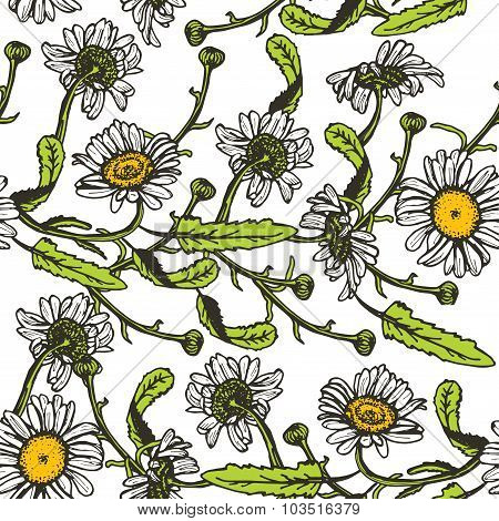 Beautiful vintage background with black daisies seamless patern on white background. Vector