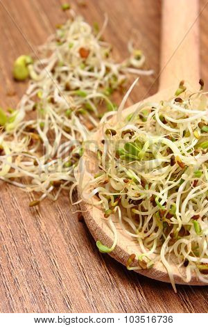 Alfalfa And Radish Sprouts On Scoop, Wooden Background
