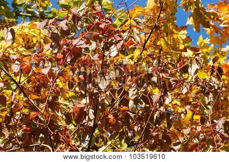 Branch Of Autumn Leaves In Park, Autumn Background
