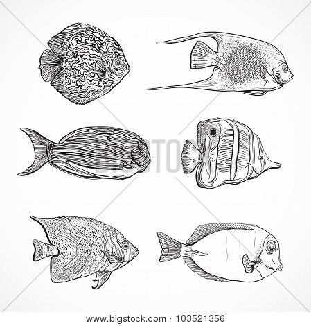 Collection of tropical fish.Vintage set ofhand drawn marine fauna.Isolated vector illustration in li