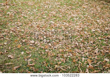 oak leaves on the ground
