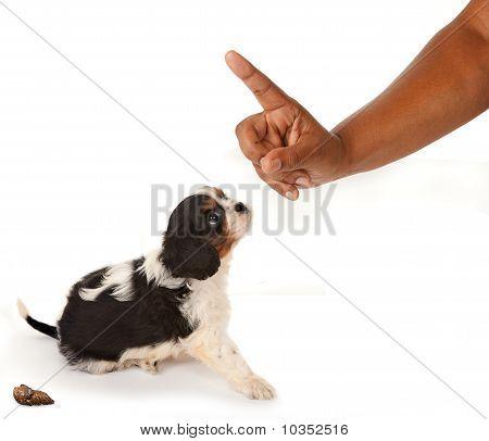 Dog Reprimand