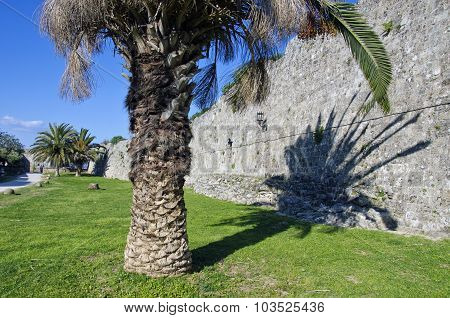 Palm Tree By Old Wall  In Rhodes