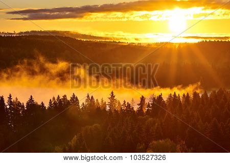 Sun Beams And Foggy Forest