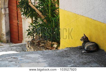 Street Cat In Bakar
