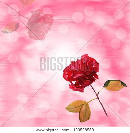 A red rose on a branch against a blurred background (watercolour drawing) greeting card