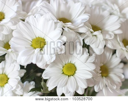 A photo background of white daisies