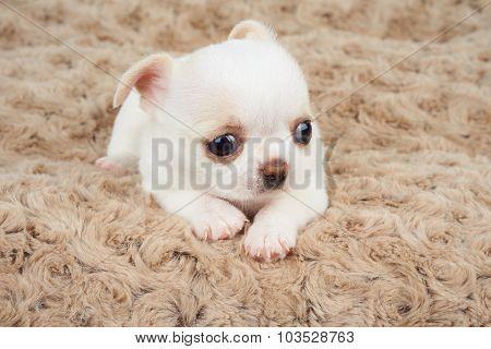 Puppy On Beige Mat