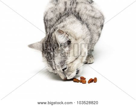 Cat Eats Dry Food Close-up On A White Background