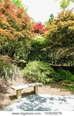 Bench In Garden With Maple