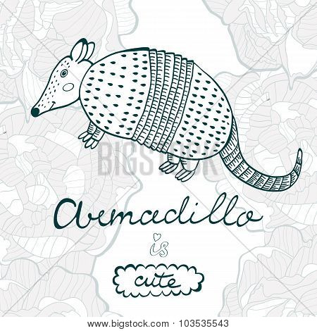 Armadillo is cute