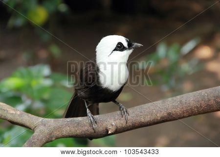 Cute Bird On A Tree