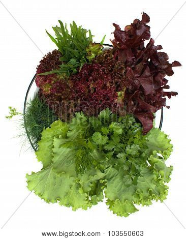 Different Types Of Lettuce And Spicy Herbs