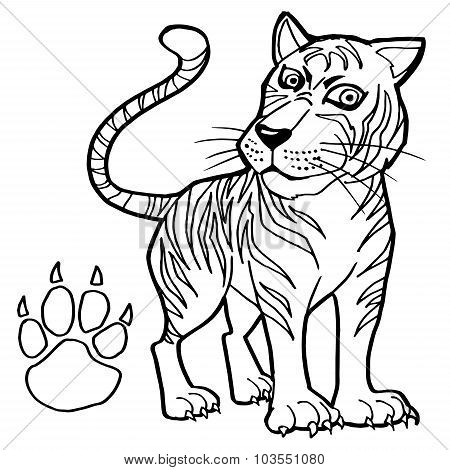tiger with paw print Coloring Page vector