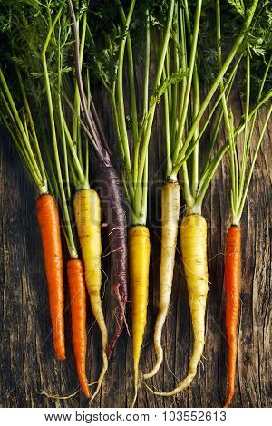 Fresh Organic Heirloom Carrot Varieties Of Purple, Yellow, Orange And White Color