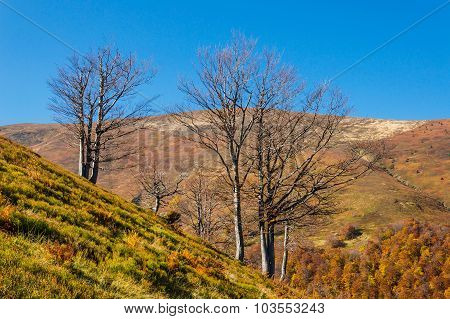 Autumn Landscape With Trees