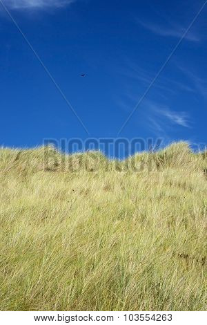 Large Green Sand Dunes And Blue Sky