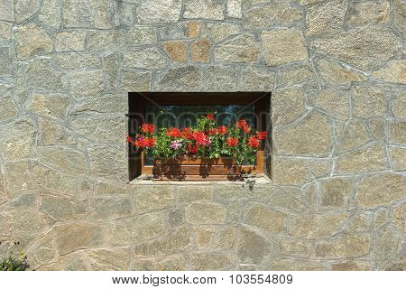 Red Flowers On The Wall