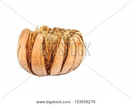 Coconut Husk On White Background