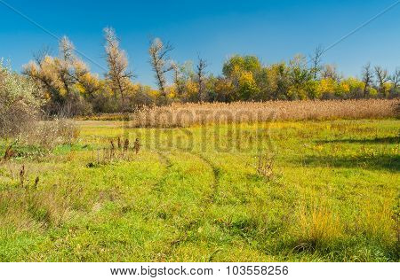 Landscape with autumnal meadow