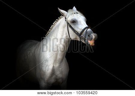 Horse smile