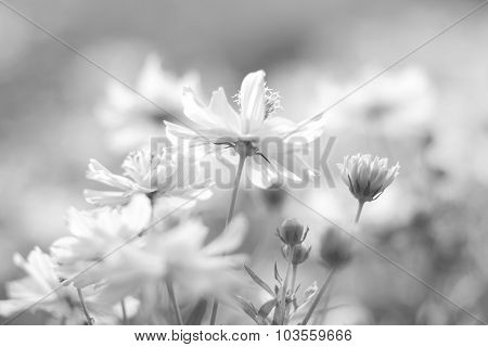 Beautiful Flowers On Summer Vintage  Blurred Background