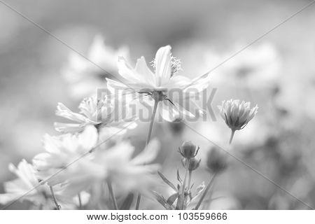 Beautiful Flowers On Summer Vintage  Blurred Background