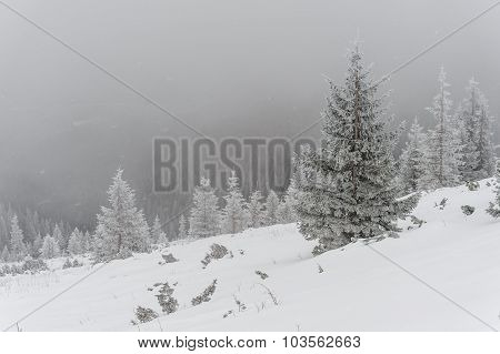 Winter Landscape With Snowfal