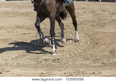 Thessloniki Greece June 14 2015: Close up of the stirrup on the horse during competition matches riding round obstacles